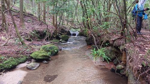 上流部の沢。穏やかな流れ。