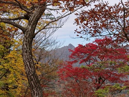 紅葉と鹿納山