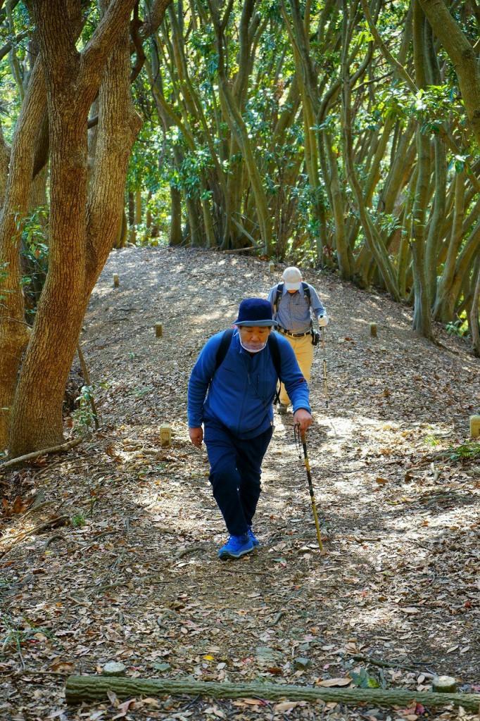 照葉樹林が美しい御嶽神社参道
